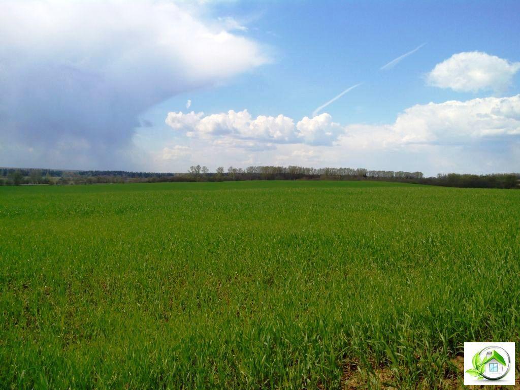 Купить земельный участок 12 соток в середине деревни, в Московской обл - Фото 10