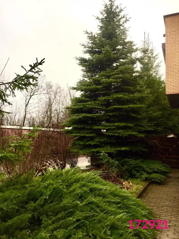 Аренда дома, Рождественно, Мытищинский район, Территория Барвиха Клаб - Фото 21