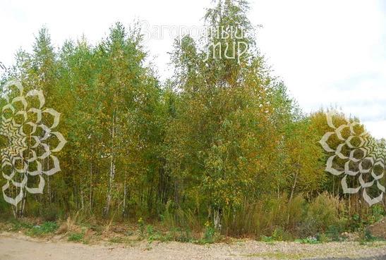 Продам участок, Дмитровское шоссе, 28 км от МКАД - Фото 2