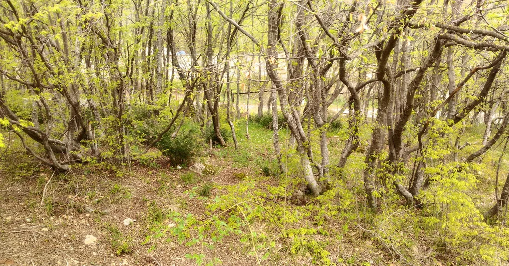 Продается земельный участок Респ Крым, г Ялта, ул Большевистская, д 2 - Фото 6