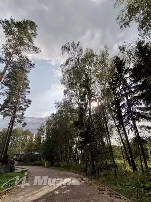 Продажа участка 21 с. в кп Сосновый бор - Фото 4
