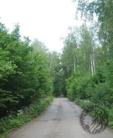 Участок в новой Москве 6,1 сотка среди дремучего леса - Фото 6