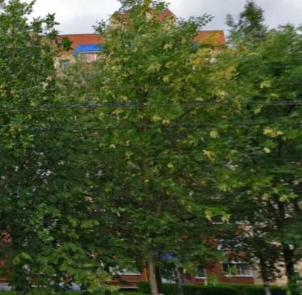 Продажа квартиры, Саранск, Ул. Ульянова - Фото 0