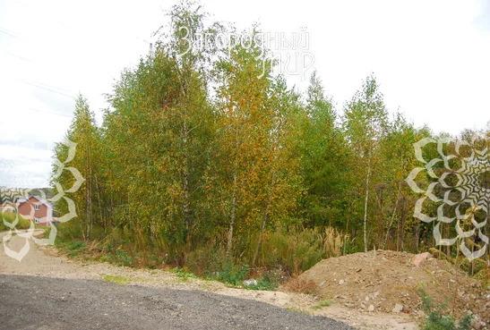 Продам участок, Дмитровское шоссе, 28 км от МКАД - Фото 1