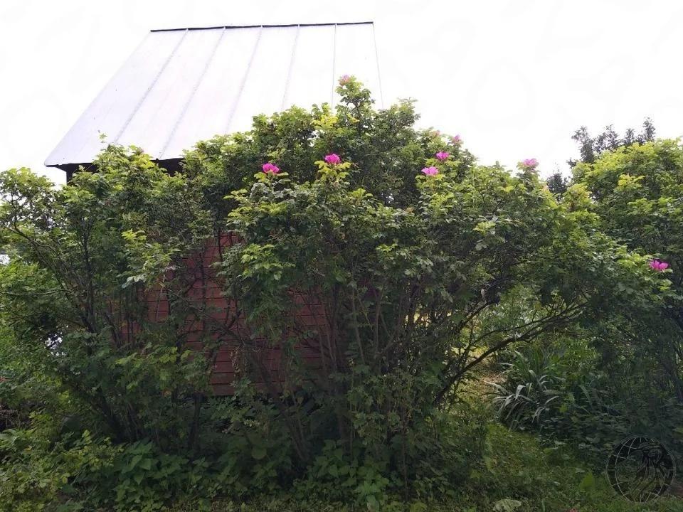 Продается небольшой дом на участке 4 сотки рядом с Глобусом - Фото 6