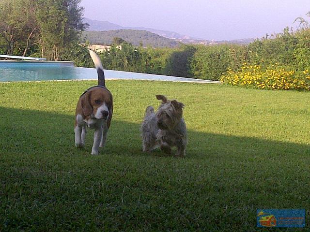 Вилла класса люкс с бассейном в аренду на Сардинии. - Фото 7