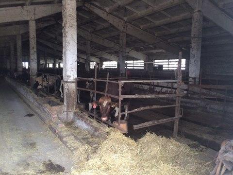 8 000 000 Руб., Продается ферма в Белгородской области, Продажа готового бизнеса Шишино, Белгородский район, ID объекта - 100058704 - Фото 6