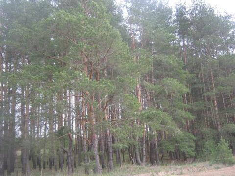 Продам 2-х эт дачу с печью среди хвойного леса и рек 15 мин от Рязани, Купить дом Мурмино, Рязанский район, ID объекта - 502213954 - Фото 11