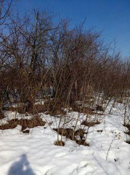 Продам дачку 19 км от Рязани, Купить дом Сергеевка, Рязанский район, ID объекта - 502555412 - Фото 2