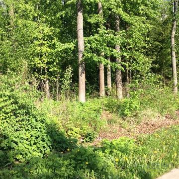 Лесной участок, в центре поселка, со всеми оплаченными коммуникациями. .