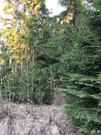Купить земельный участок в Кленово
