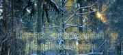 Дом, Ярославское ш, 11 км от МКАД, Загорянский пос. 11 км Ярославское ., Снять дом Загорянский, Щелковский район, ID объекта - 502206096 - Фото 35